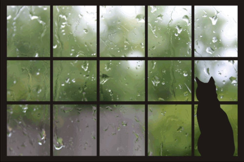 cat,cats,images,of,love,photography,rain-0057b9334c9b1ba497ea863a58437362_h