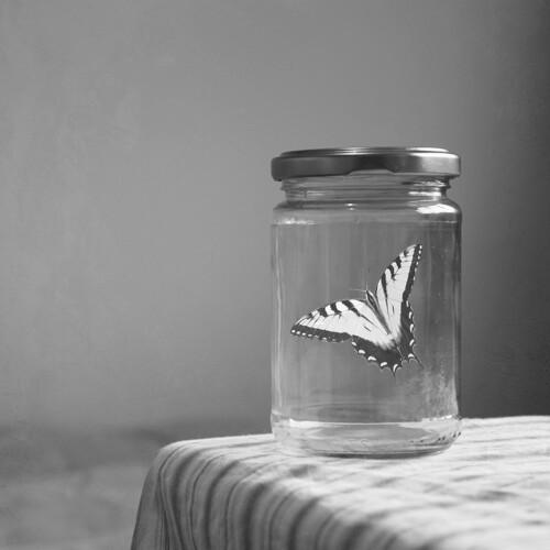 black-and-white-butterfly-glass-sad-Favim.com-311375